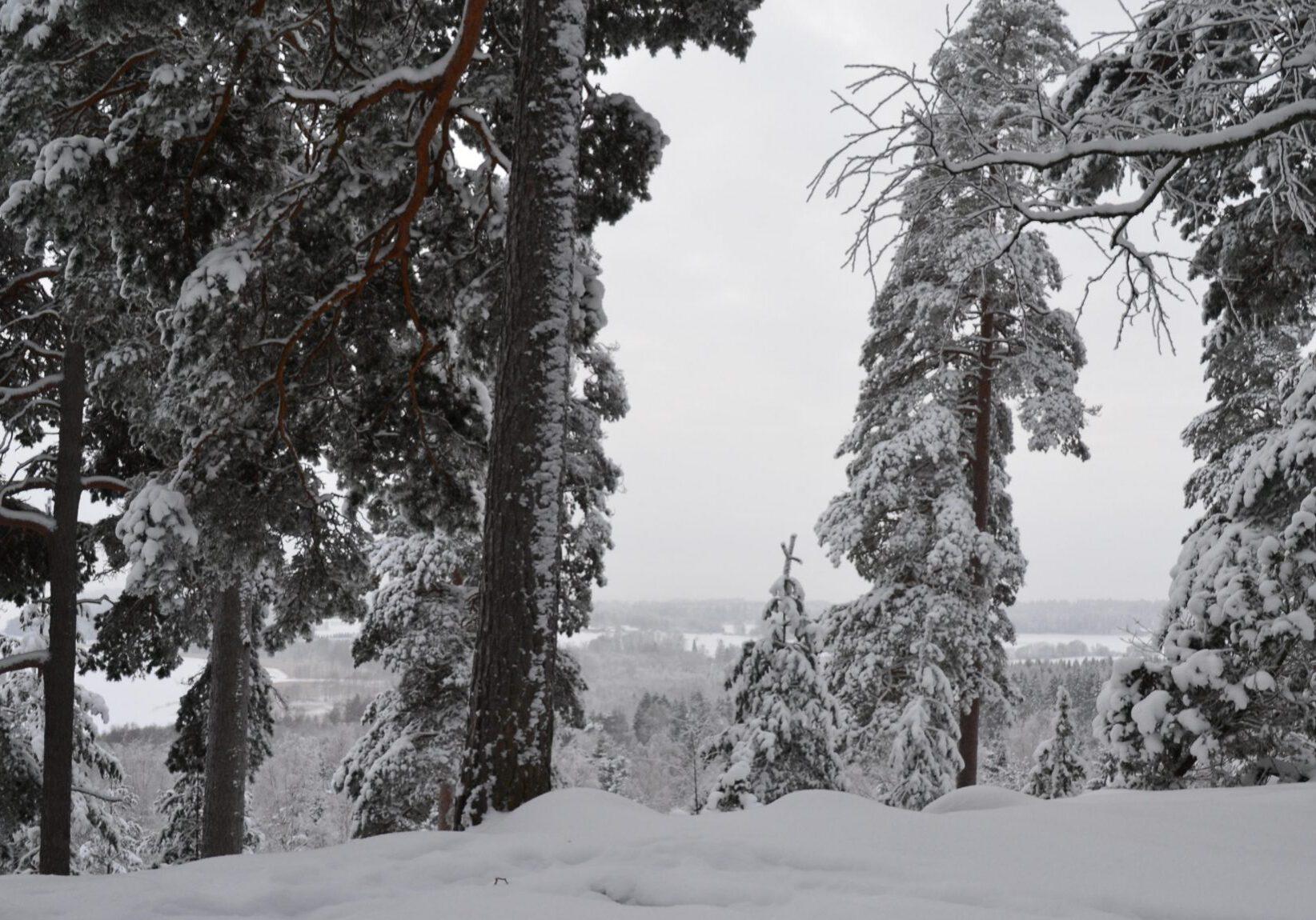 Lumimaisema harju